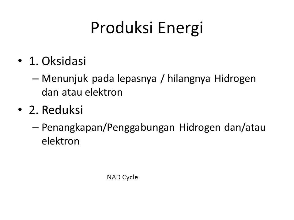Produksi Energi 1. Oksidasi – Menunjuk pada lepasnya / hilangnya Hidrogen dan atau elektron 2. Reduksi – Penangkapan/Penggabungan Hidrogen dan/atau el