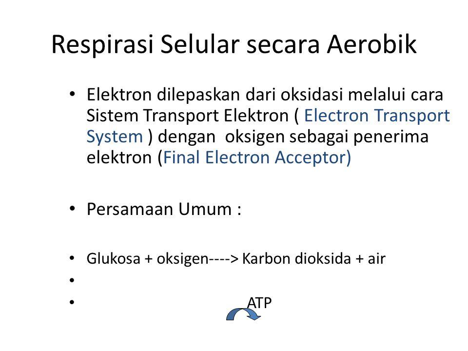 Respirasi Selular secara Aerobik Elektron dilepaskan dari oksidasi melalui cara Sistem Transport Elektron ( Electron Transport System ) dengan oksigen