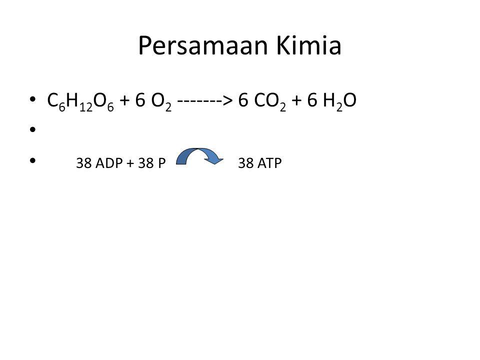 Persamaan Kimia C 6 H 12 O 6 + 6 O 2 -------> 6 CO 2 + 6 H 2 O 38 ADP + 38 P 38 ATP
