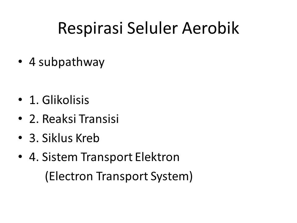 Respirasi Seluler Aerobik 4 subpathway 1. Glikolisis 2. Reaksi Transisi 3. Siklus Kreb 4. Sistem Transport Elektron (Electron Transport System)