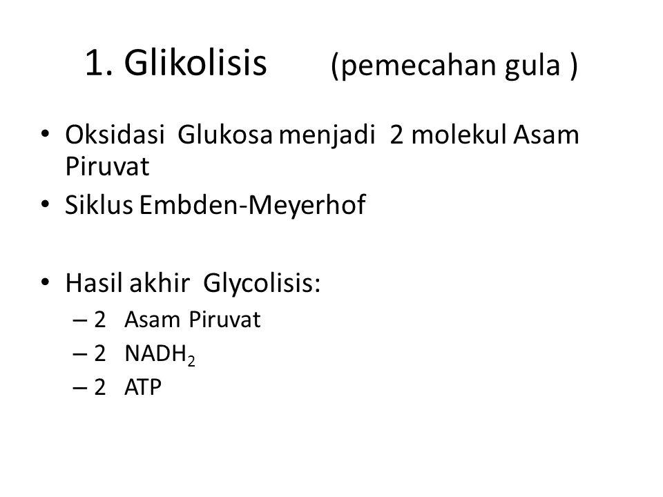 1. Glikolisis (pemecahan gula ) Oksidasi Glukosa menjadi 2 molekul Asam Piruvat Siklus Embden-Meyerhof Hasil akhir Glycolisis: – 2 Asam Piruvat – 2 NA