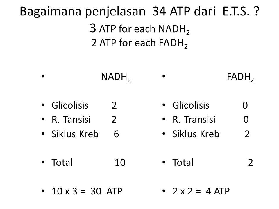Bagaimana penjelasan 34 ATP dari E.T.S. ? 3 ATP for each NADH 2 2 ATP for each FADH 2 NADH 2 Glicolisis 2 R. Tansisi 2 Siklus Kreb 6 Total 10 10 x 3 =