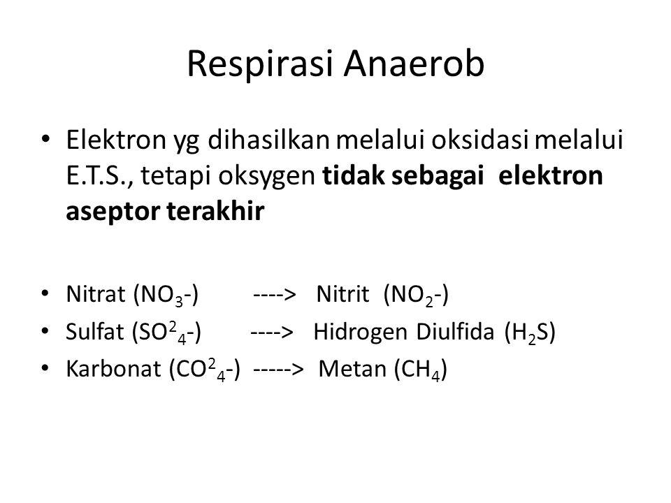 Respirasi Anaerob Elektron yg dihasilkan melalui oksidasi melalui E.T.S., tetapi oksygen tidak sebagai elektron aseptor terakhir Nitrat (NO 3 -) ---->