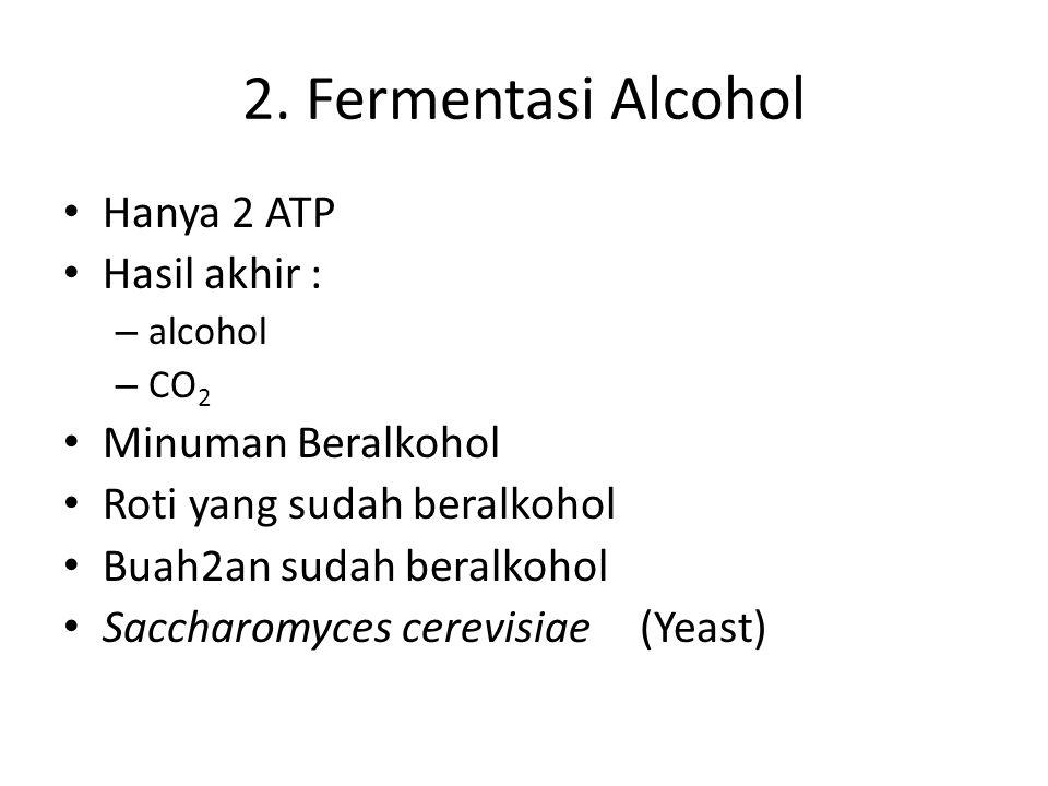 2. Fermentasi Alcohol Hanya 2 ATP Hasil akhir : – alcohol – CO 2 Minuman Beralkohol Roti yang sudah beralkohol Buah2an sudah beralkohol Saccharomyces