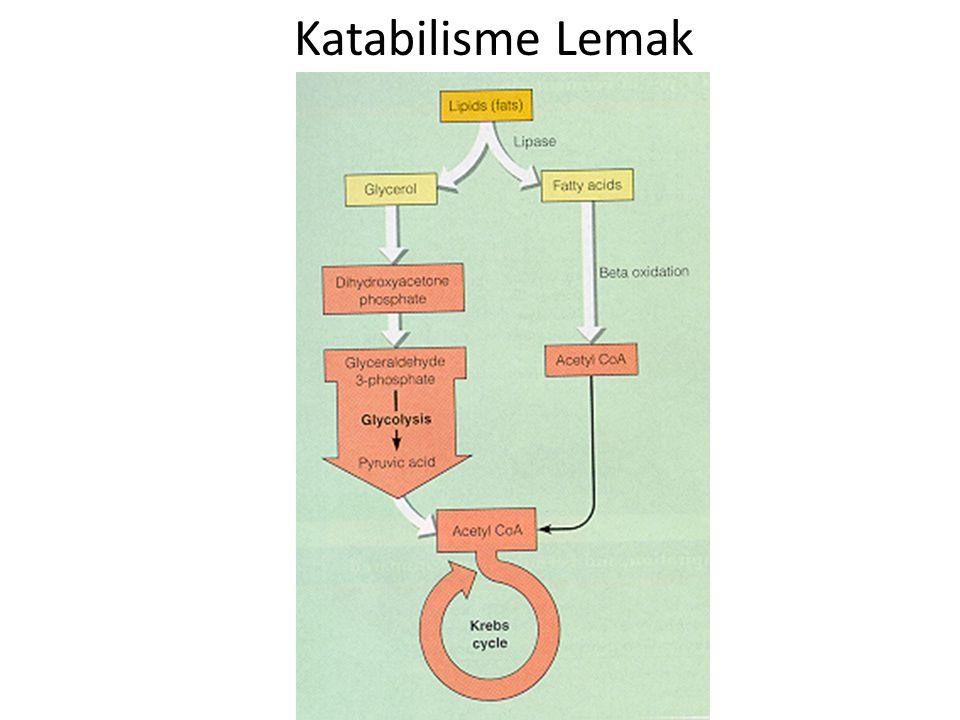 Katabilisme Lemak