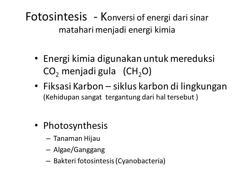 Fotosintesis - K onversi of energi dari sinar matahari menjadi energi kimia Energi kimia digunakan untuk mereduksi CO 2 menjadi gula (CH 2 O) Fiksasi