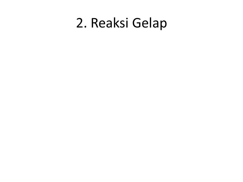 2. Reaksi Gelap