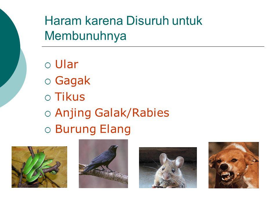 Haram karena Disuruh untuk Membunuhnya  Ular  Gagak  Tikus  Anjing Galak/Rabies  Burung Elang