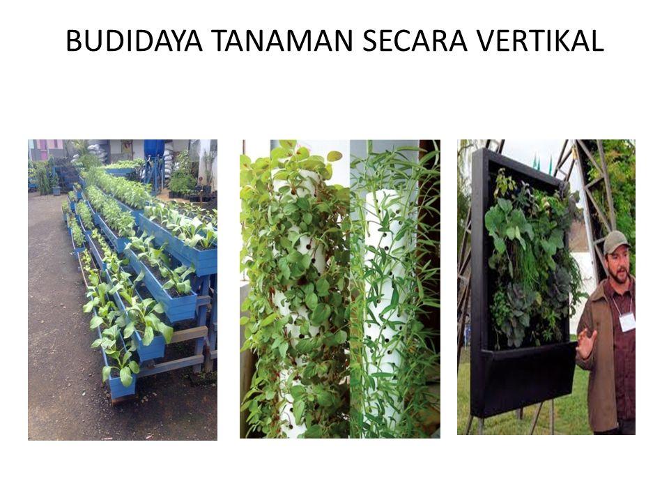 BUDIDAYA TANAMAN SECARA VERTIKAL