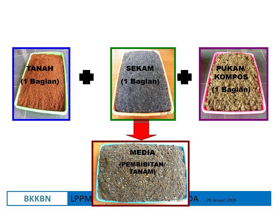 BKKBNLPPM-UNIVERSITAS GAJAH MADA 29 Januari 2009 TANAH (1 Bagian) SEKAM (1 Bagian) PUKAN/ KOMPOS (1 Bagian) MEDIA (PEMBIBITAN/ TANAM)
