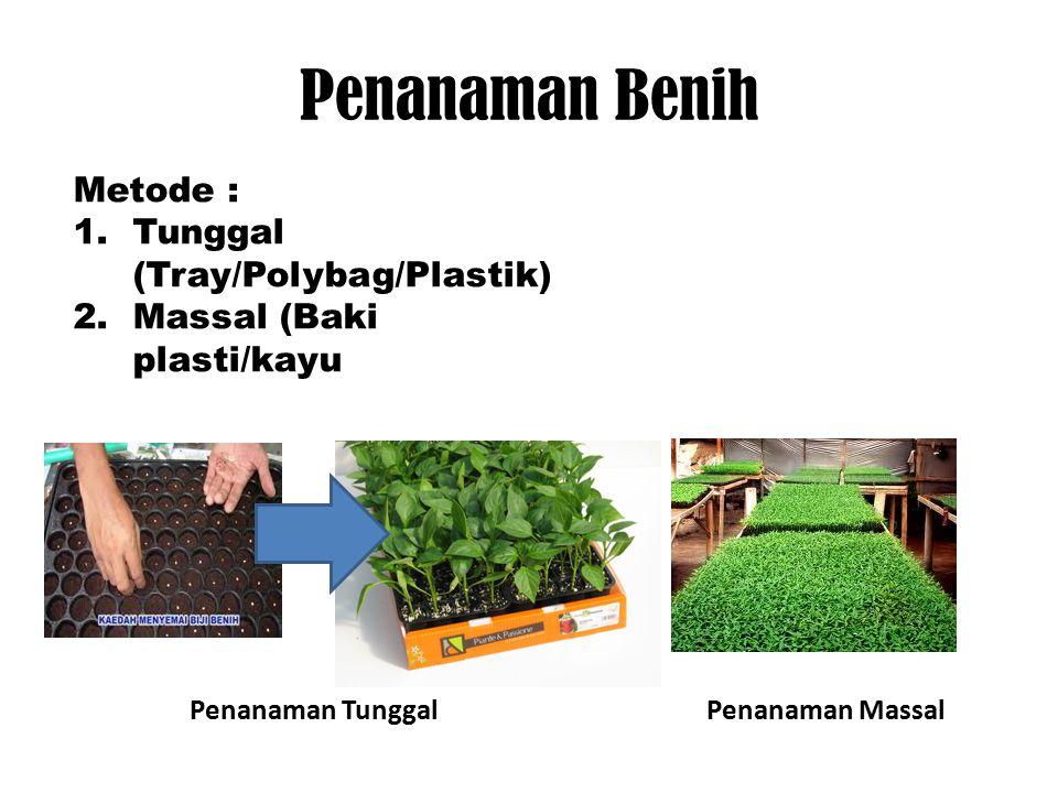 Penanaman Benih Metode : 1.Tunggal (Tray/Polybag/Plastik) 2.Massal (Baki plasti/kayu Penanaman TunggalPenanaman Massal