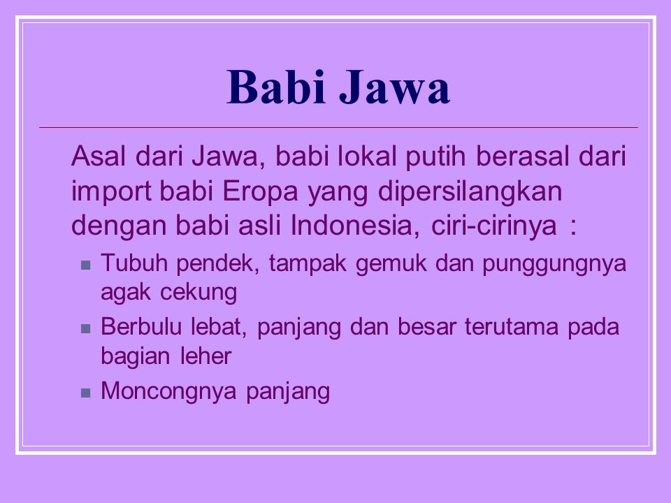 Babi Jawa Asal dari Jawa, babi lokal putih berasal dari import babi Eropa yang dipersilangkan dengan babi asli Indonesia, ciri-cirinya : Tubuh pendek,