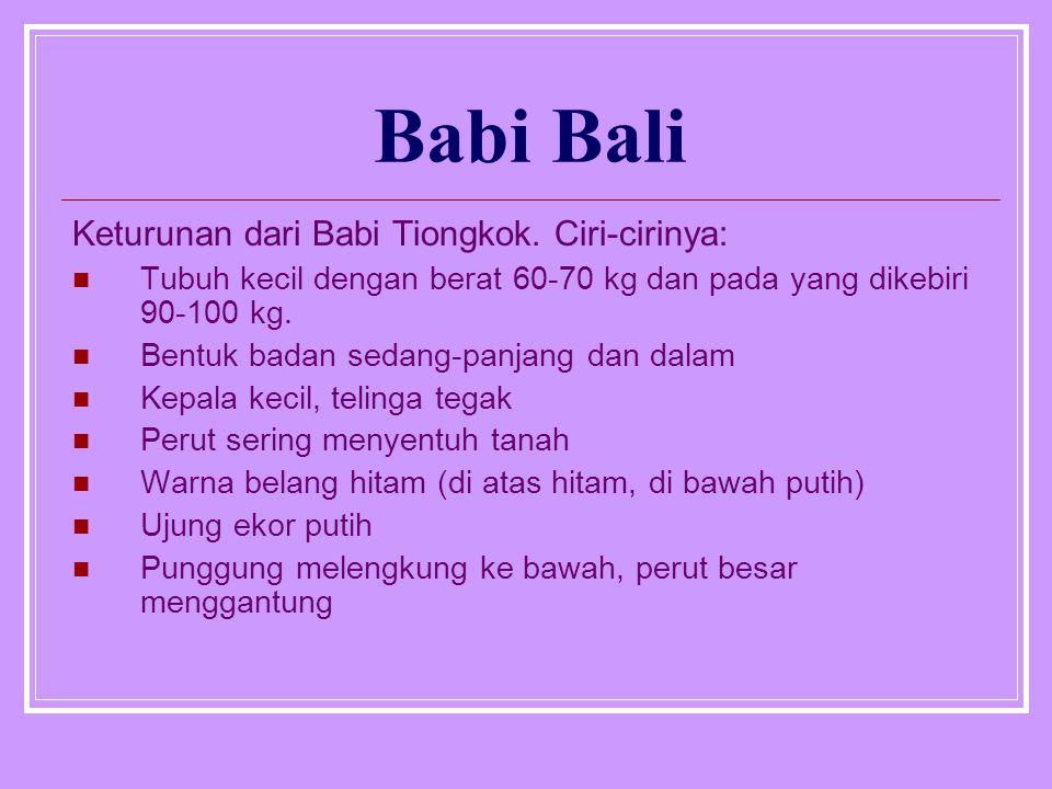 Babi Bali Keturunan dari Babi Tiongkok. Ciri-cirinya: Tubuh kecil dengan berat 60-70 kg dan pada yang dikebiri 90-100 kg. Bentuk badan sedang-panjang