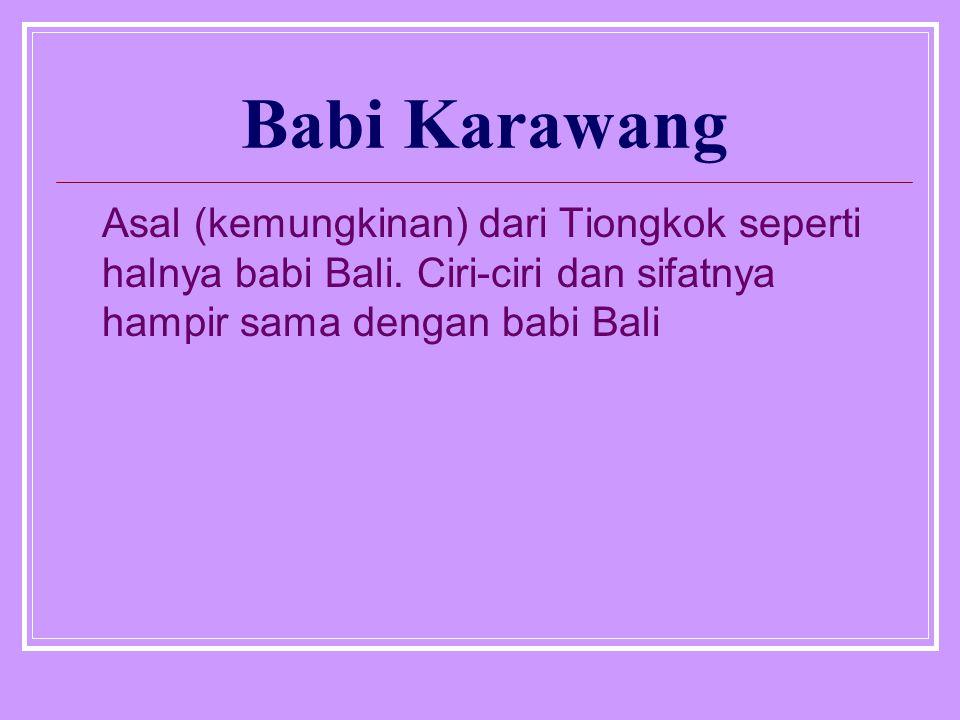 Babi Karawang Asal (kemungkinan) dari Tiongkok seperti halnya babi Bali. Ciri-ciri dan sifatnya hampir sama dengan babi Bali