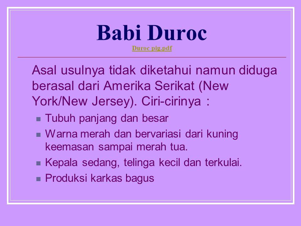 Babi Duroc Duroc pig.pdf Duroc pig.pdf Asal usulnya tidak diketahui namun diduga berasal dari Amerika Serikat (New York/New Jersey). Ciri-cirinya : Tu
