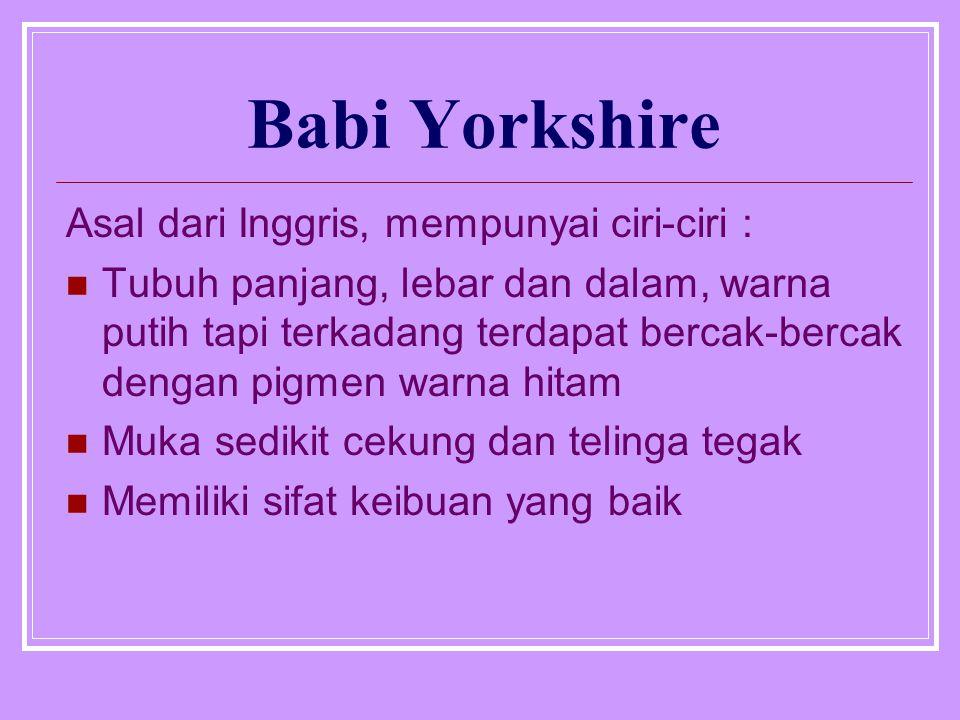 Babi Yorkshire Asal dari Inggris, mempunyai ciri-ciri : Tubuh panjang, lebar dan dalam, warna putih tapi terkadang terdapat bercak-bercak dengan pigmen warna hitam Muka sedikit cekung dan telinga tegak Memiliki sifat keibuan yang baik