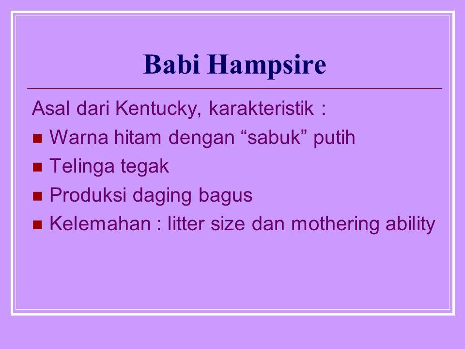 "Babi Hampsire Asal dari Kentucky, karakteristik : Warna hitam dengan ""sabuk"" putih Telinga tegak Produksi daging bagus Kelemahan : litter size dan mot"