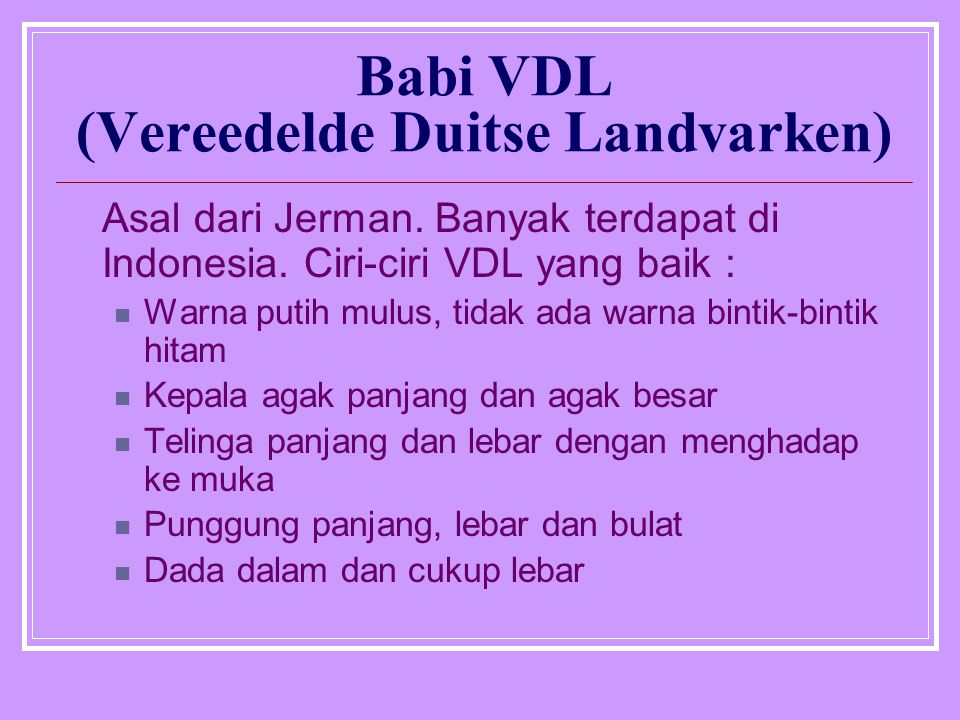 Babi VDL (Vereedelde Duitse Landvarken) Asal dari Jerman. Banyak terdapat di Indonesia. Ciri-ciri VDL yang baik : Warna putih mulus, tidak ada warna b
