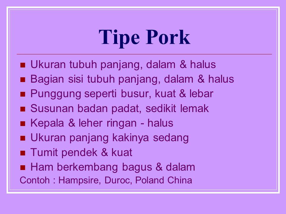 Tipe Bacon Ukuran tubuh panjang Dalam tubuh sedang & halus Ukuran lebar tubuh sedang Timbunan lemak sedang & halus Contoh : Landrace, Tamworth