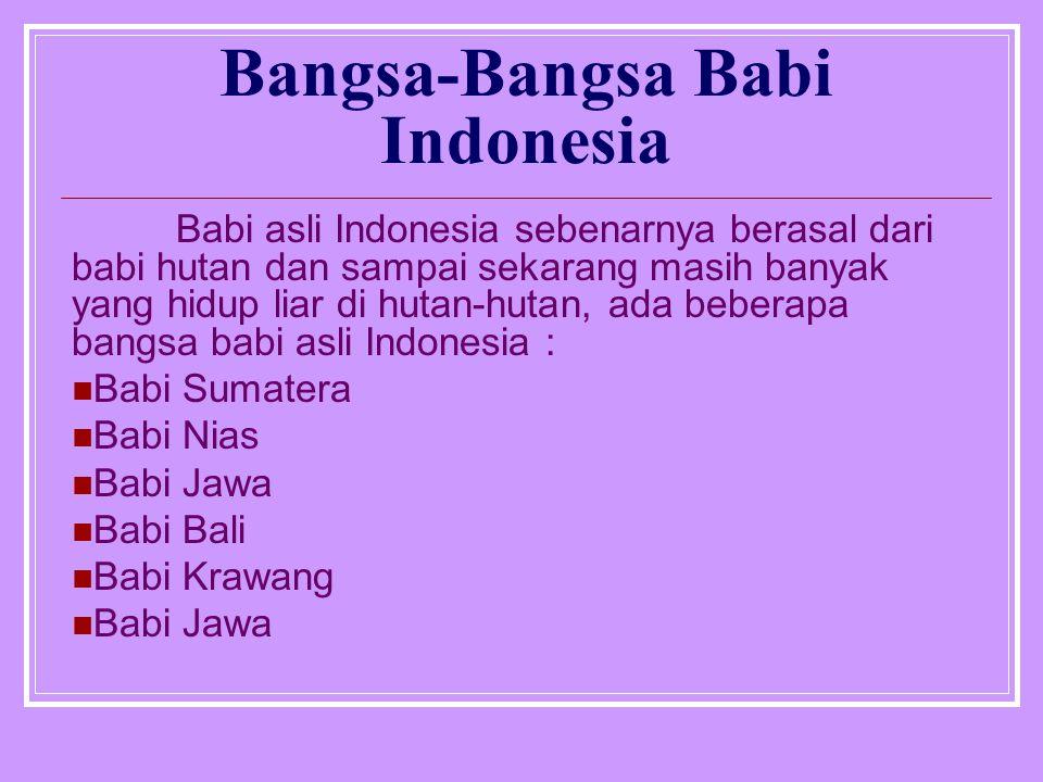 Bangsa-Bangsa Babi Indonesia Babi asli Indonesia sebenarnya berasal dari babi hutan dan sampai sekarang masih banyak yang hidup liar di hutan-hutan, ada beberapa bangsa babi asli Indonesia : Babi Sumatera Babi Nias Babi Jawa Babi Bali Babi Krawang Babi Jawa