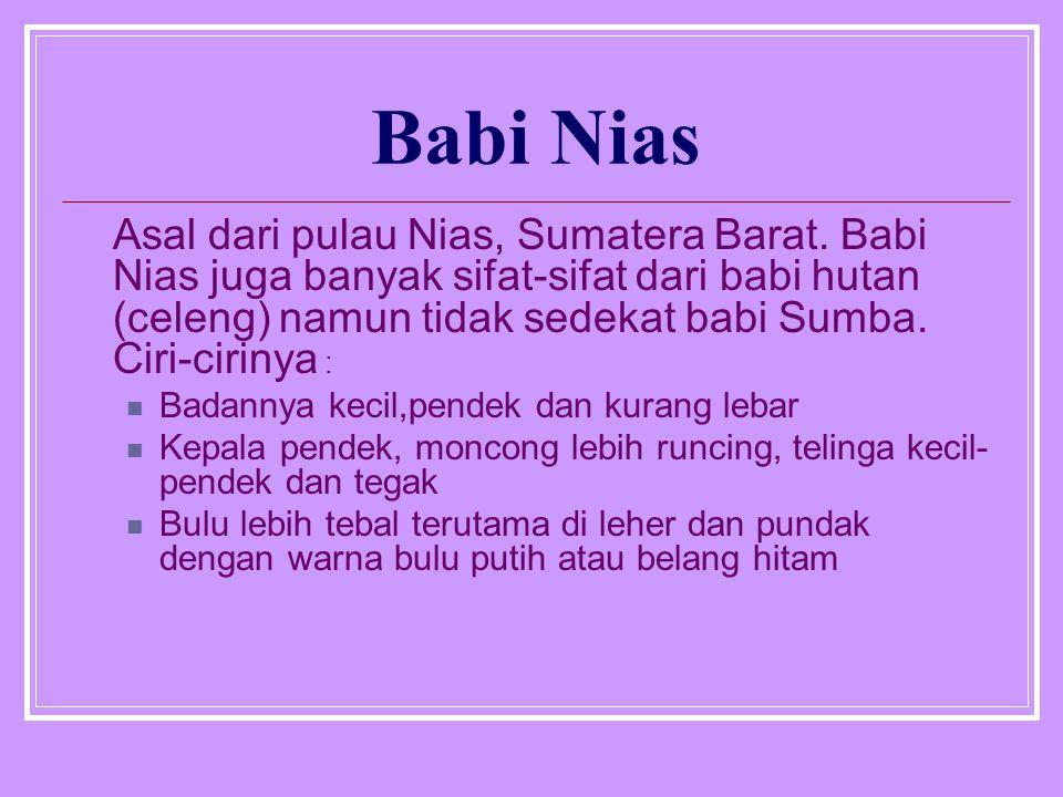 Babi Nias Asal dari pulau Nias, Sumatera Barat. Babi Nias juga banyak sifat-sifat dari babi hutan (celeng) namun tidak sedekat babi Sumba. Ciri-ciriny