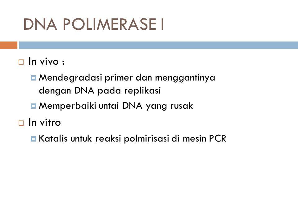 DNA POLIMERASE I  In vivo :  Mendegradasi primer dan menggantinya dengan DNA pada replikasi  Memperbaiki untai DNA yang rusak  In vitro  Katalis untuk reaksi polmirisasi di mesin PCR