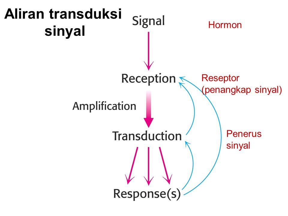 Aliran transduksi sinyal Hormon Reseptor (penangkap sinyal) Penerus sinyal