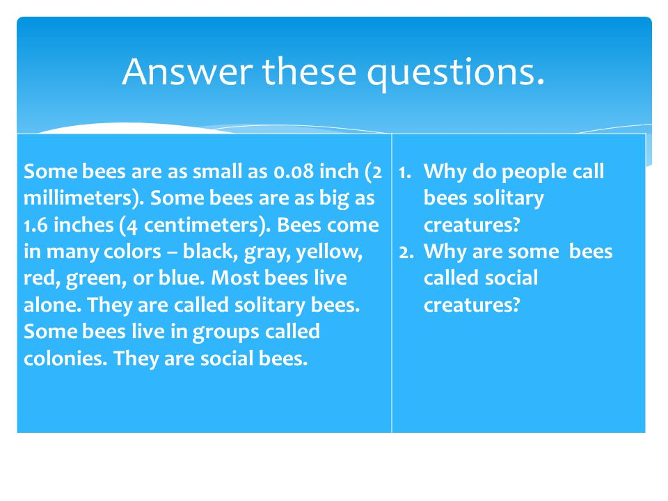 Some bees are as small as 0.08 inch (2 millimeters). Some bees are as big as 1.6 inches (4 centimeters). Bees come in many colors – black, gray, yello