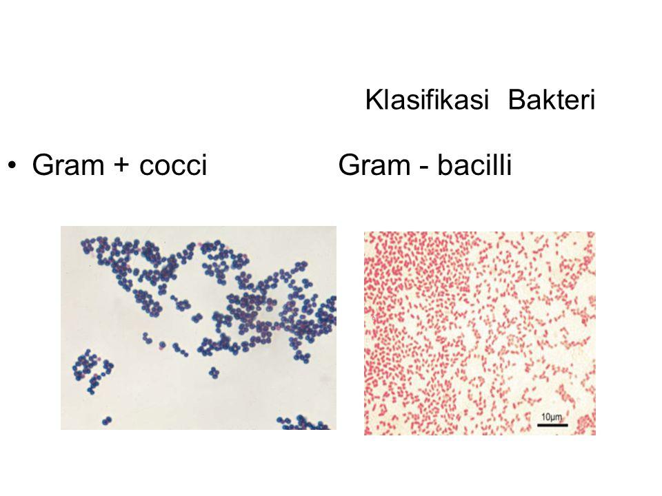 Klasifikasi Bakteri Gram +cocciGram - bacilli