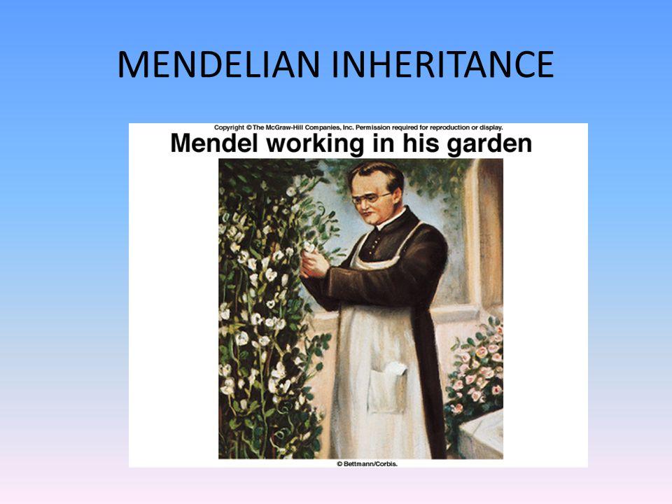 MENDELIAN INHERITANCE