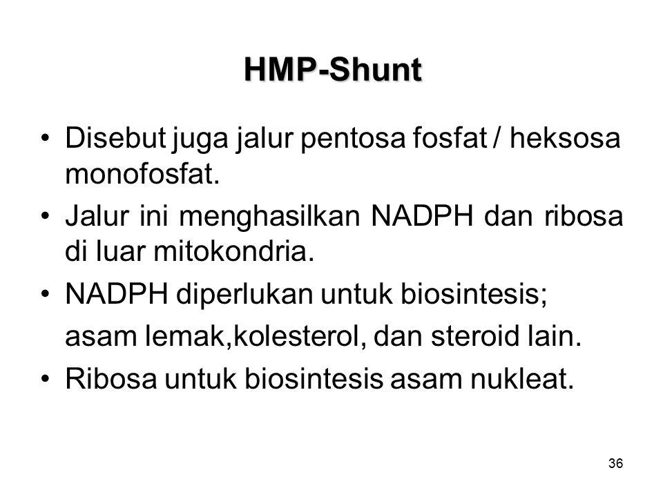 36 HMP-Shunt Disebut juga jalur pentosa fosfat / heksosa monofosfat.