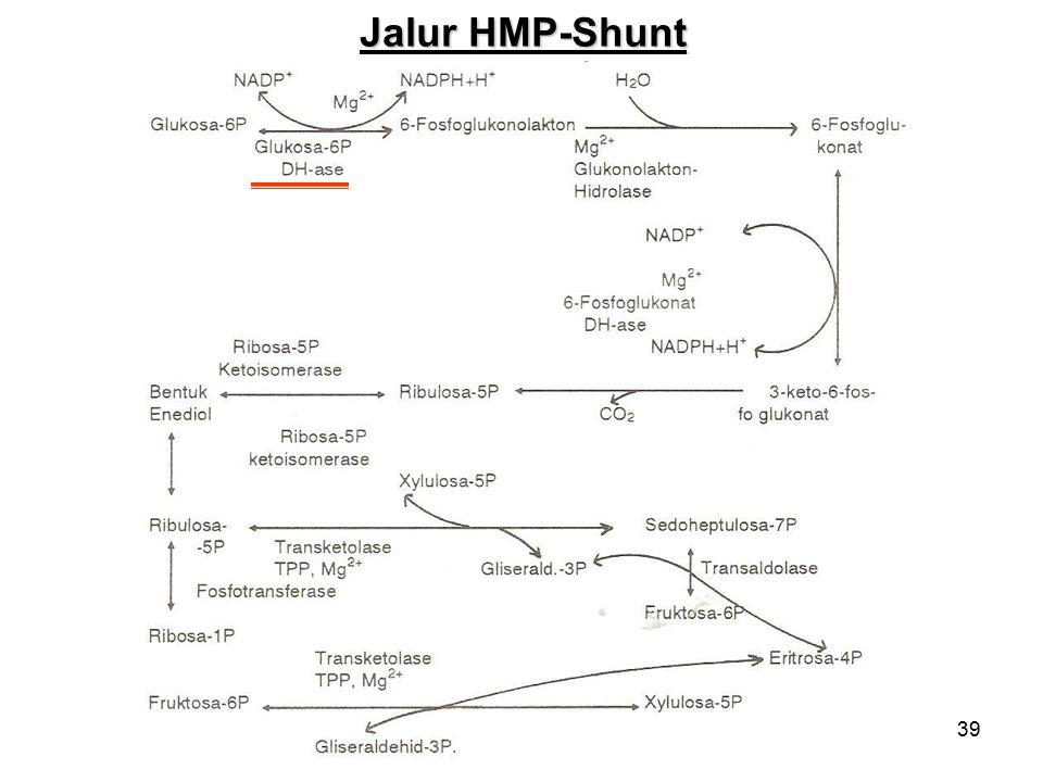 39 Jalur HMP-Shunt