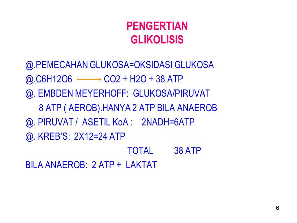 27 Glikolisis Anaerob pada Ragi