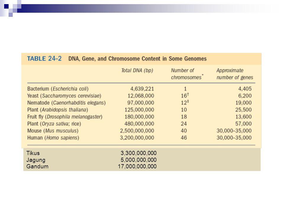 Tikus 3,300,000,000 Jagung 5,000,000,000 Gandum 17,000,000,000