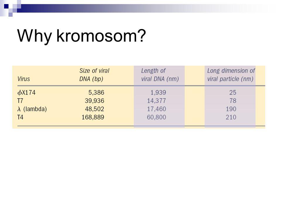 Why kromosom?