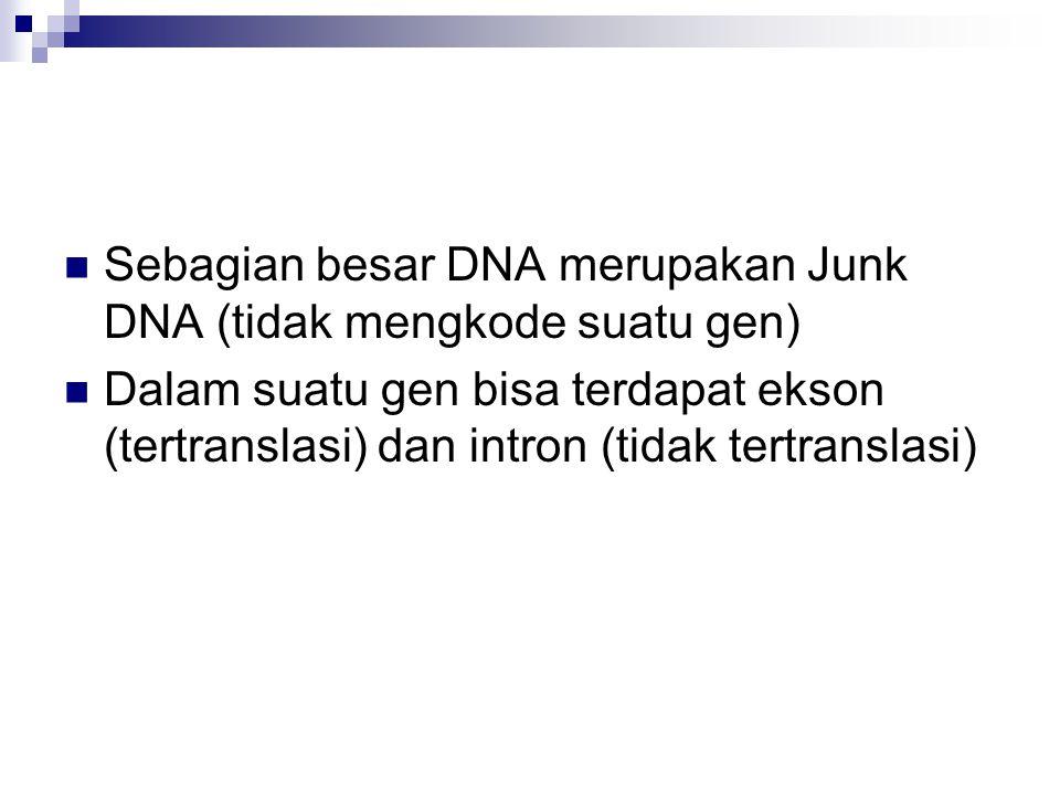 Sebagian besar DNA merupakan Junk DNA (tidak mengkode suatu gen) Dalam suatu gen bisa terdapat ekson (tertranslasi) dan intron (tidak tertranslasi)