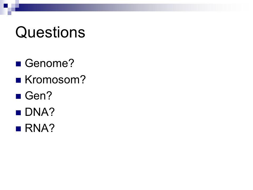 Questions Genome? Kromosom? Gen? DNA? RNA?