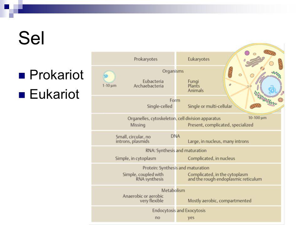 Sel Prokariot Eukariot