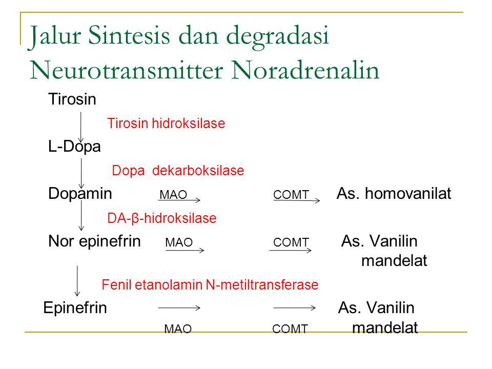 Jalur Sintesis dan degradasi Neurotransmitter Noradrenalin Tirosin Tirosin hidroksilase L-Dopa Dopa dekarboksilase Dopamin MAO COMT As. homovanilat DA