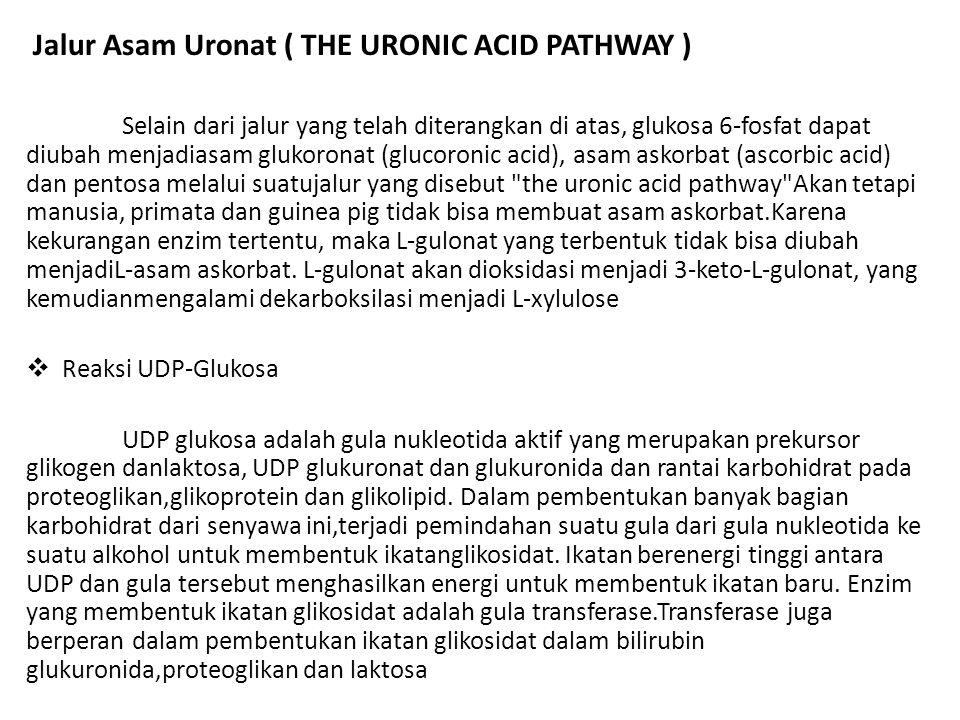 Jalur Asam Uronat ( THE URONIC ACID PATHWAY ) Selain dari jalur yang telah diterangkan di atas, glukosa 6-fosfat dapat diubah menjadiasam glukoronat (