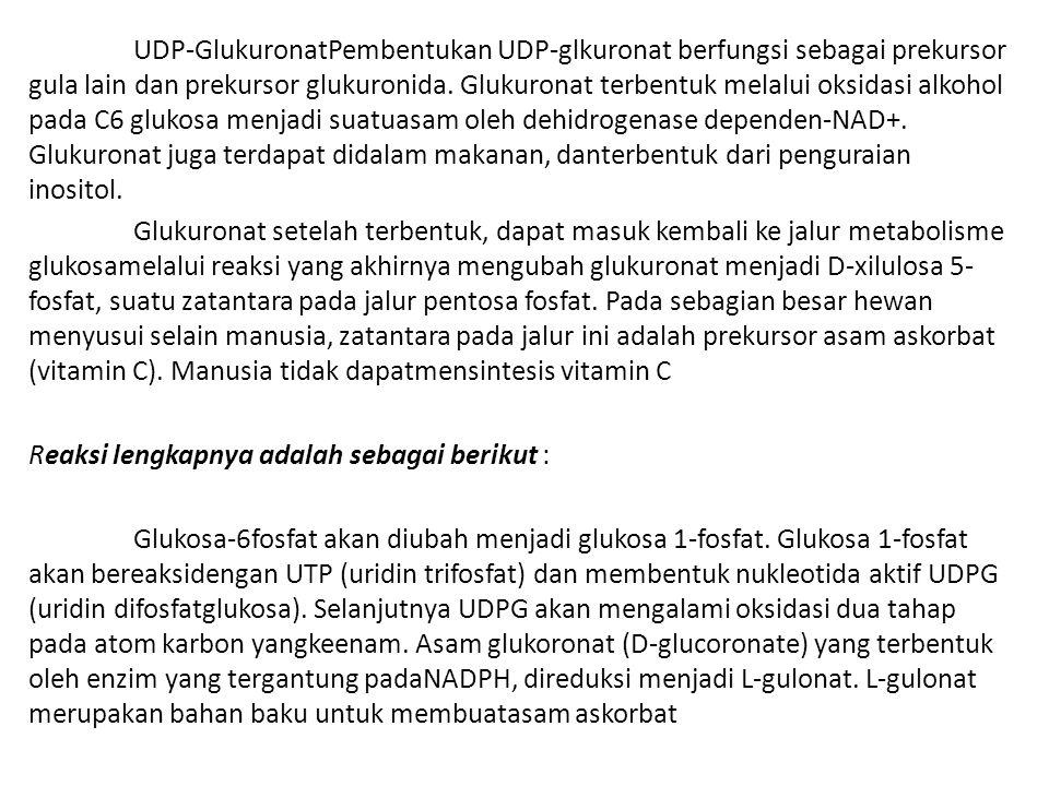 UDP-GlukuronatPembentukan UDP-glkuronat berfungsi sebagai prekursor gula lain dan prekursor glukuronida. Glukuronat terbentuk melalui oksidasi alkohol