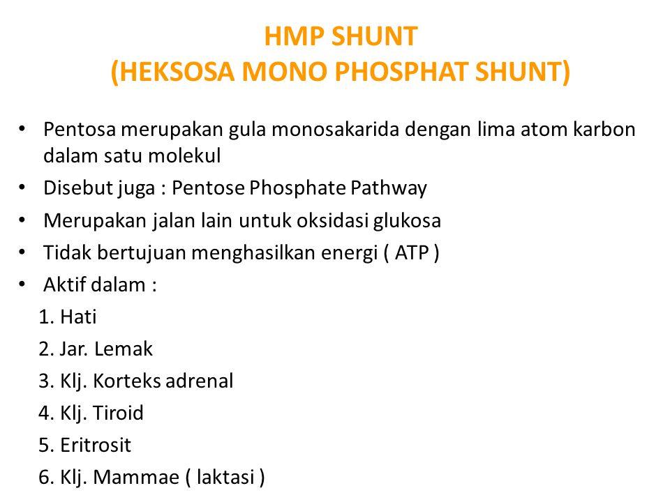 HMP SHUNT (HEKSOSA MONO PHOSPHAT SHUNT) Pentosa merupakan gula monosakarida dengan lima atom karbon dalam satu molekul Disebut juga : Pentose Phosphat