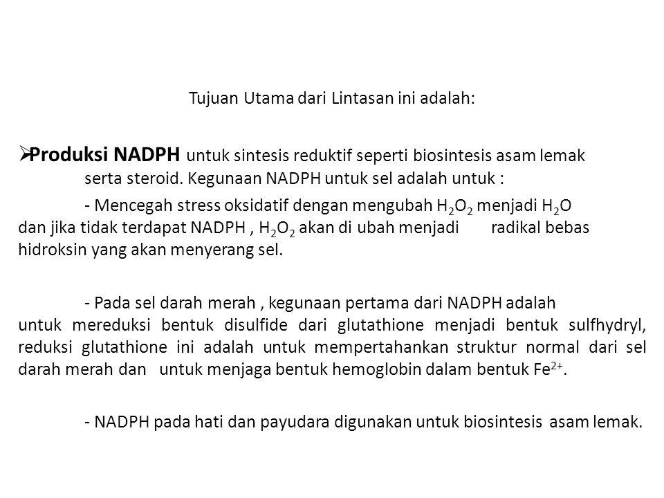 Tujuan Utama dari Lintasan ini adalah:  Produksi NADPH untuk sintesis reduktif seperti biosintesis asam lemak serta steroid. Kegunaan NADPH untuk sel