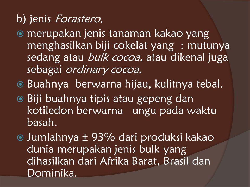 b) jenis Forastero,  merupakan jenis tanaman kakao yang menghasilkan biji cokelat yang : mutunya sedang atau bulk cocoa, atau dikenal juga sebagai or
