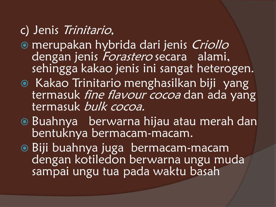 c) Jenis Trinitario,  merupakan hybrida dari jenis Criollo dengan jenis Forastero secara alami, sehingga kakao jenis ini sangat heterogen.  Kakao Tr