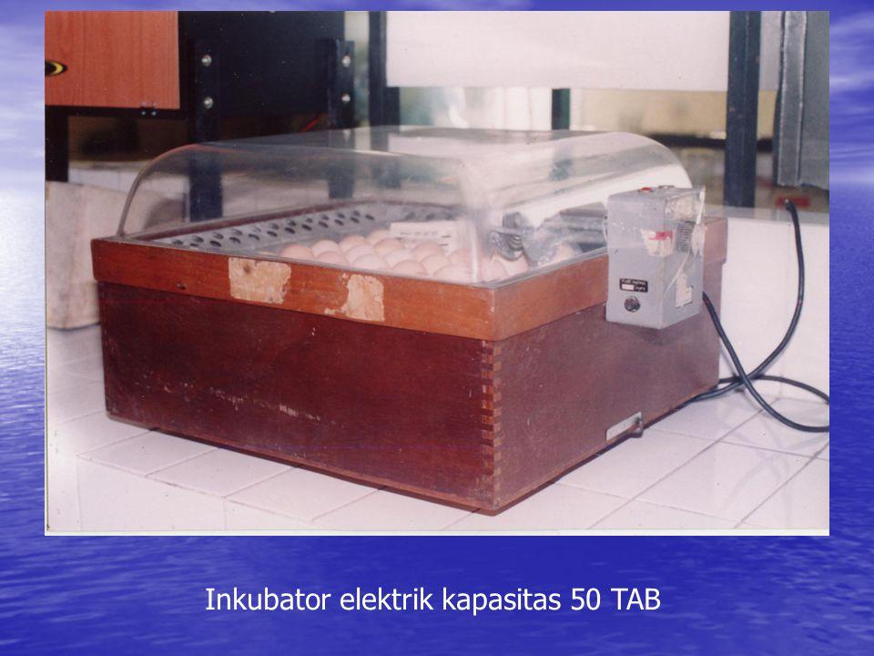 Inkubator elektrik kapasitas 50 TAB