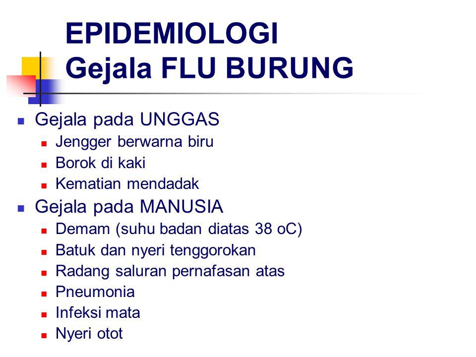 EPIDEMIOLOGI Gejala FLU BURUNG Gejala pada UNGGAS Jengger berwarna biru Borok di kaki Kematian mendadak Gejala pada MANUSIA Demam (suhu badan diatas 38 oC) Batuk dan nyeri tenggorokan Radang saluran pernafasan atas Pneumonia Infeksi mata Nyeri otot