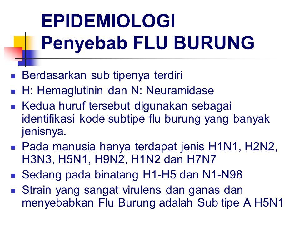 EPIDEMIOLOGI Penyebab FLU BURUNG Berdasarkan sub tipenya terdiri H: Hemaglutinin dan N: Neuramidase Kedua huruf tersebut digunakan sebagai identifikasi kode subtipe flu burung yang banyak jenisnya.