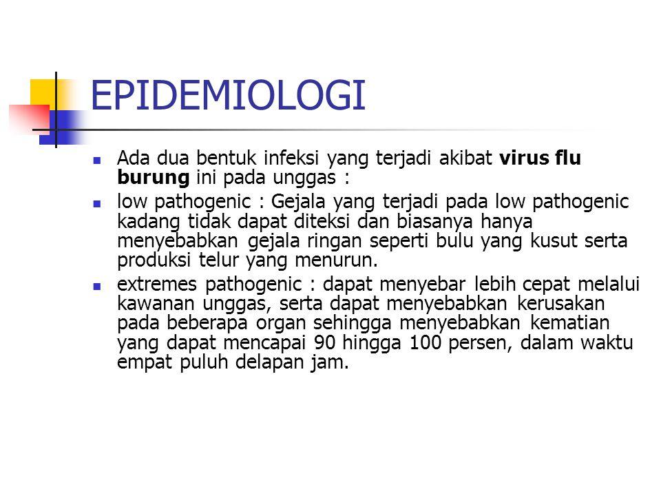 EPIDEMIOLOGI Ada dua bentuk infeksi yang terjadi akibat virus flu burung ini pada unggas : low pathogenic : Gejala yang terjadi pada low pathogenic ka
