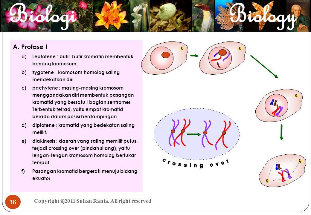 16 Copyright@2011 Suhan Ranta. All right reserved 16 A. Profase I a)Leptotene : butir-butir kromatin membentuk benang kromosom. b)zygotene : kromosom